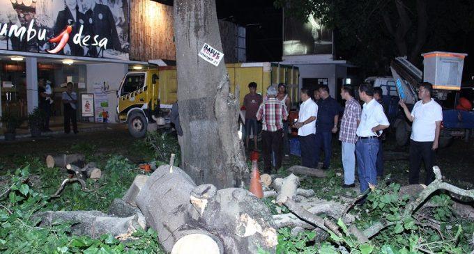 Beri Perintah Tebang Pohon, Kabid dan Kasi DPJPP Kota Palembang Dicopot Walikota