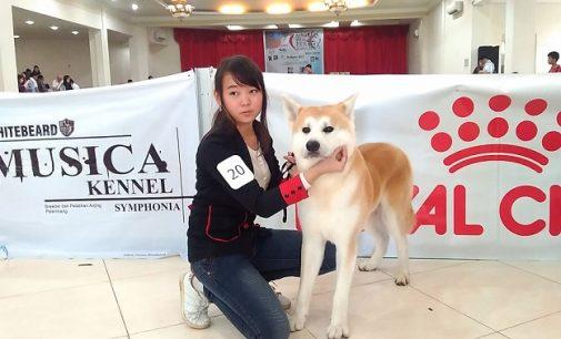 Dog Show All Bread PERKIN Sumsel 2017, Menjaga Trah Anjing Lewat Sebuah Kontes
