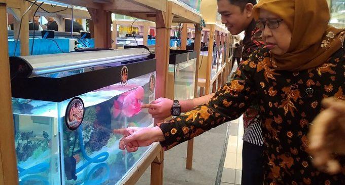 """Sempat """"Tenggelam"""" PPLP Kembali Populerkan Ikan Louhan"""
