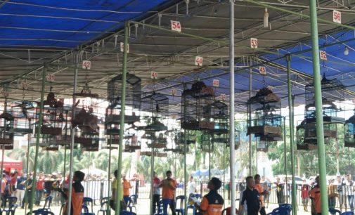 Festival Pameran Burung Berkicau Kapolres Muara Enim Cup 2018 Berlangsung Seru