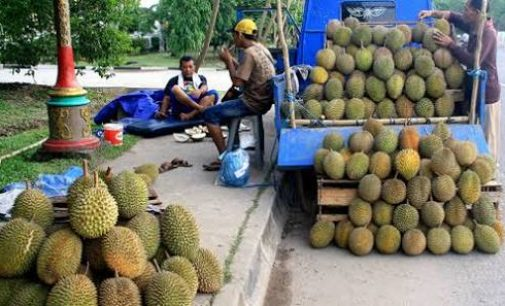 Kota Palembang Dibanjiri Pedagang Durian
