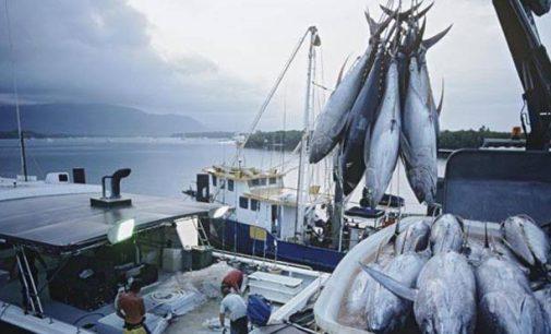 Garis Pantai Terpanjang Kedua Dunia, Kenapa Indonesia Masih Impor Ikan ?
